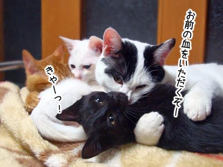 仔猫2012.12.24①