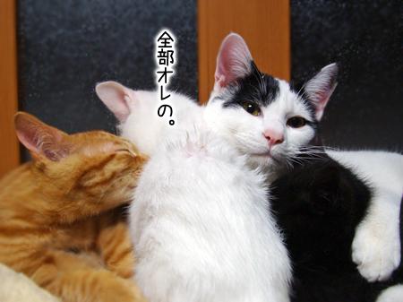 仔猫2012.12.24②