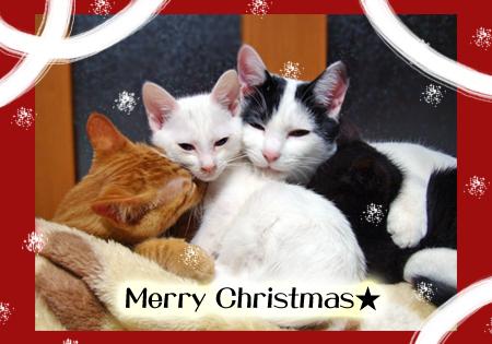 クリスマス2012.12.24