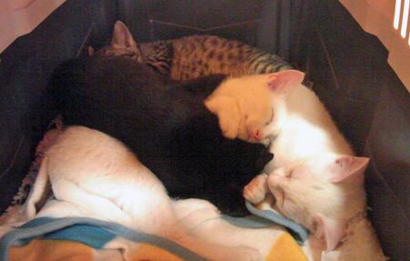 仔猫4 2012.12.25