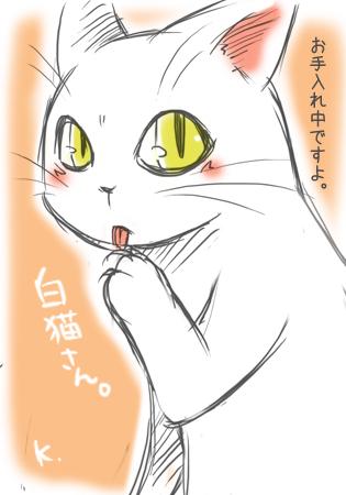 白猫さん2013.1.5