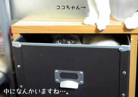 箱入り2013.1.15①