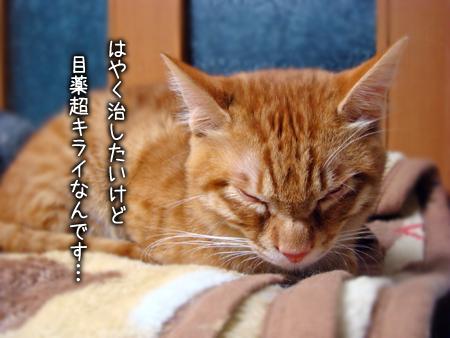 ふーみん2013.1.15②