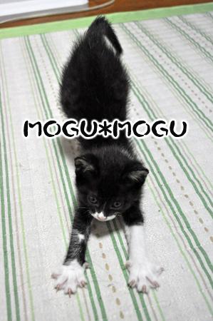 MOGUMOGU.jpg