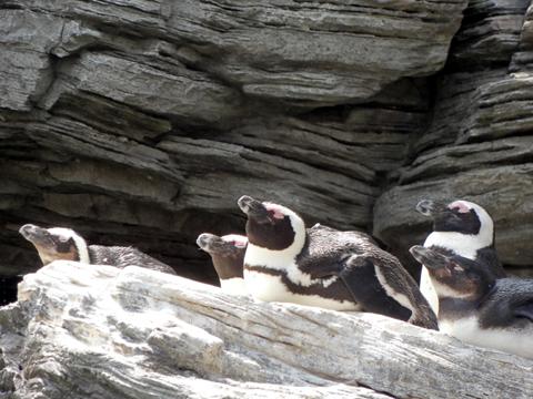 サンシャイン水族館 ペンギン2