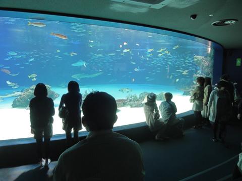 サンシャイン水族館 大水槽
