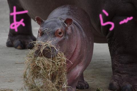 東武動物公園 5