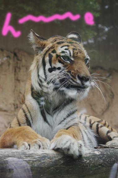 東武動物公園 23
