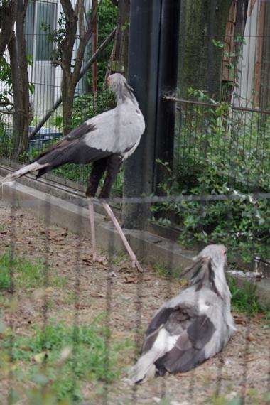 東武動物公園 05