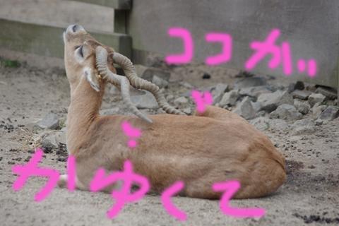 東武動物公園 010