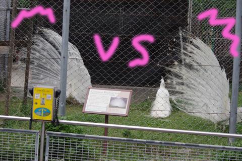 東武動物公園 015