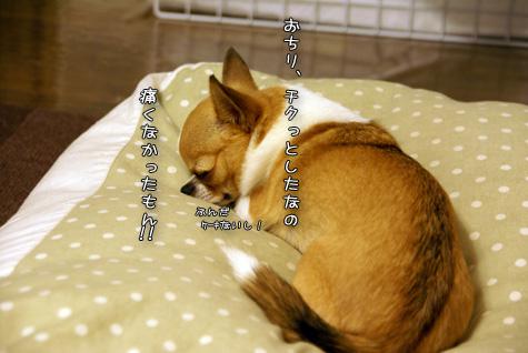 DSC046601007.jpg