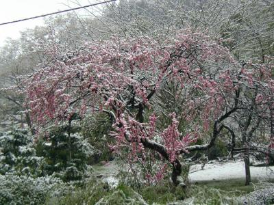 2013年4月21日 4月の雪景色①