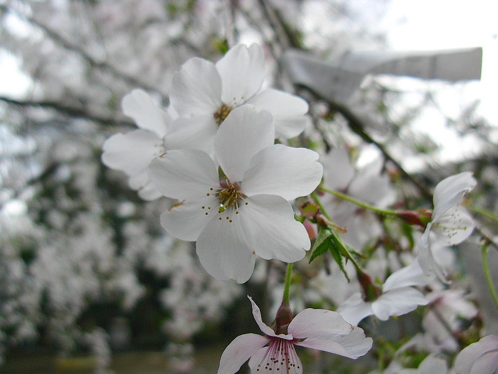 2010_04_01  (29)