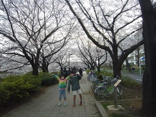 2013桜-1