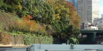 お茶の水紅葉