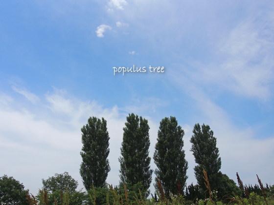 1207populus10