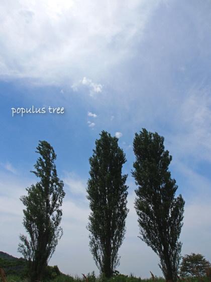 1207populus14