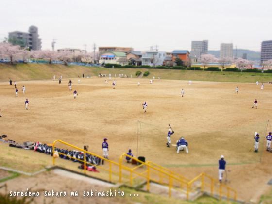 1303sakura09