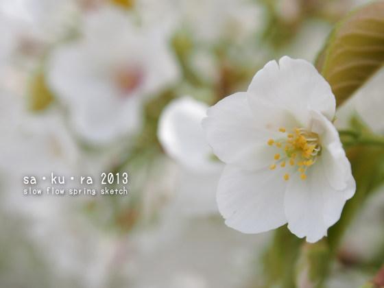 1304sakura201316
