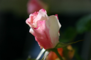 IMG_9216_20121105152853.jpg