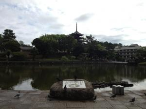 sarusawa0617_convert_20120618113337.jpg
