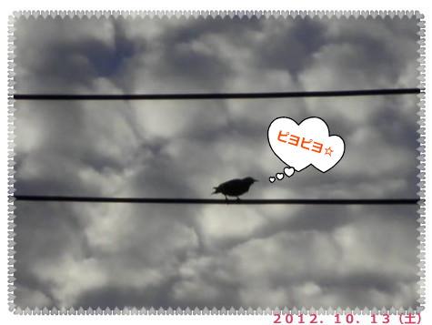 花ブ20121018-4