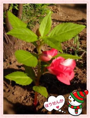 花ブ20121018-7