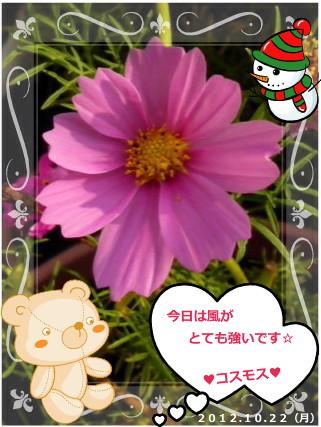 花ブ20121023-2