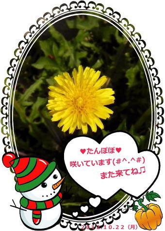 花ブ20121023-5