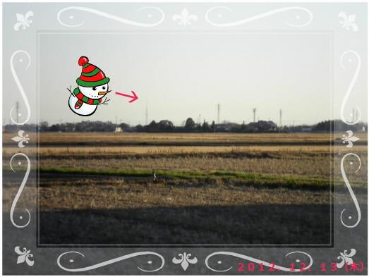 花ブ20121214-5