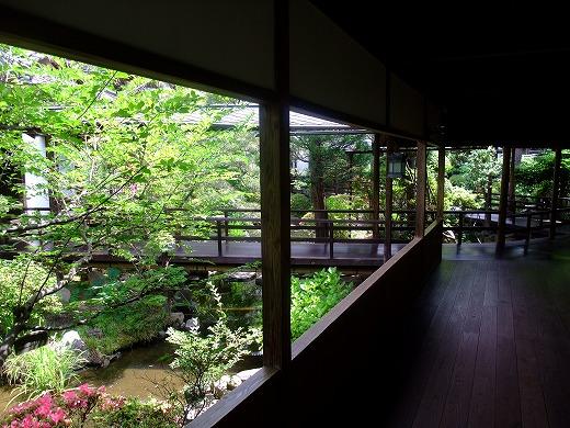 花屋20120716 092