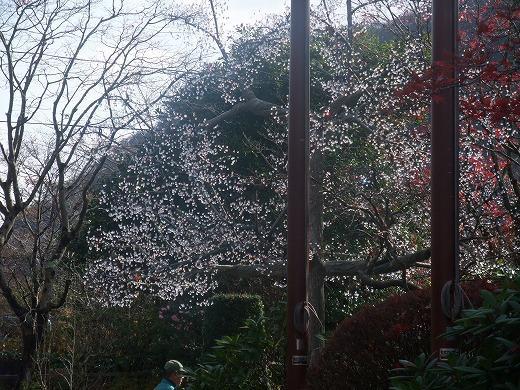 早雲閣2箱根201211 073