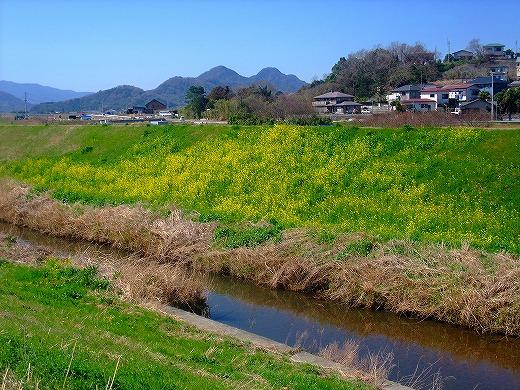 SAKURAsakura 063
