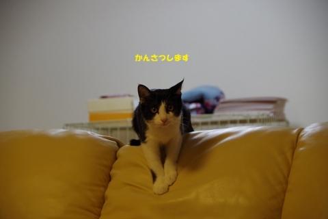 IMGP5609②