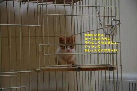 IMGP5642②