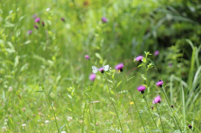 植物と昆虫 5
