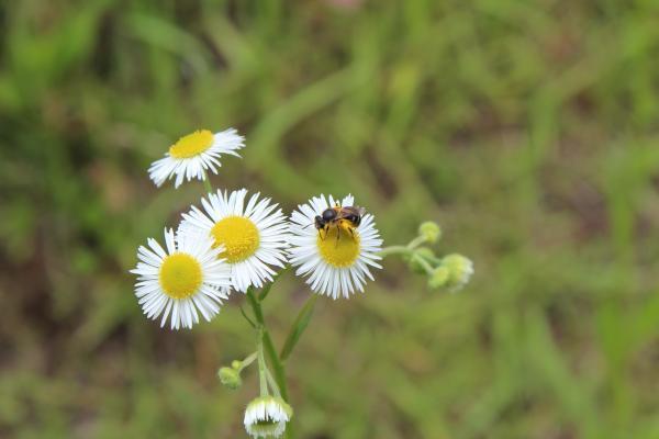 植物と昆虫 1