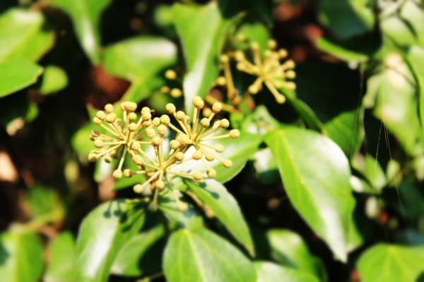 at 植物