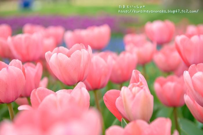 DSC_8241.jpg