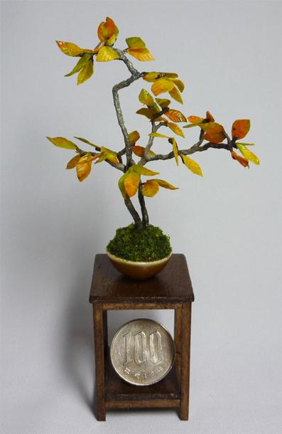 ブナの盆栽1