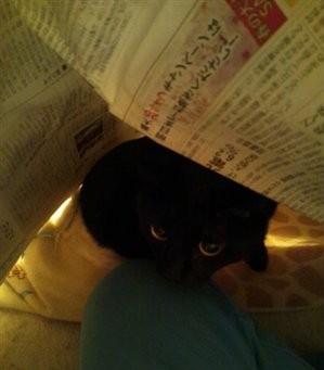 新聞に潜るクロエ1
