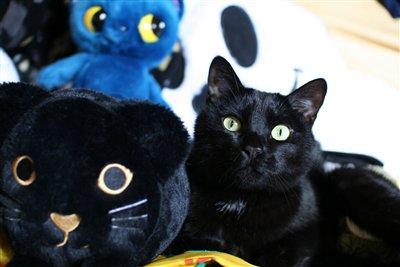 黒猫と並ぶクロエ