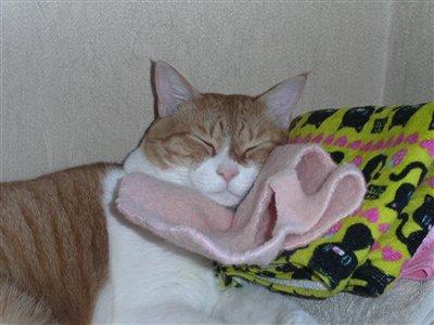 お洋服を枕に・・・