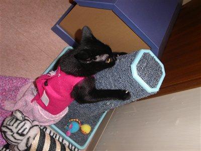 爪とぎに生る猫
