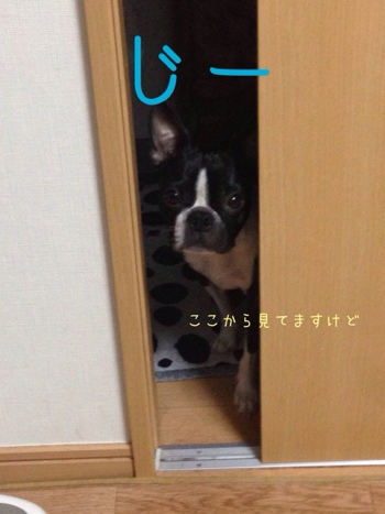 fc2blog_2014011810183245f.jpg