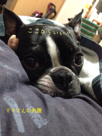fc2blog_201401181025462bb.jpg