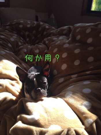 fc2blog_201401312106130e2.jpg