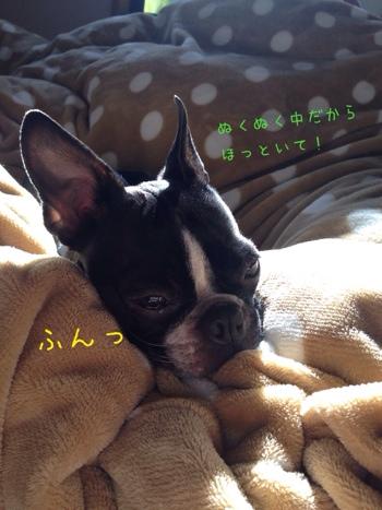 fc2blog_20140131210835c61.jpg