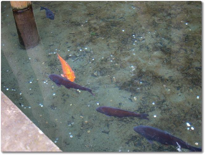 鹿島神宮2014
